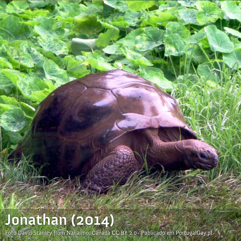 MUNDO: A tartaruga mais velha do mundo afinal é gay